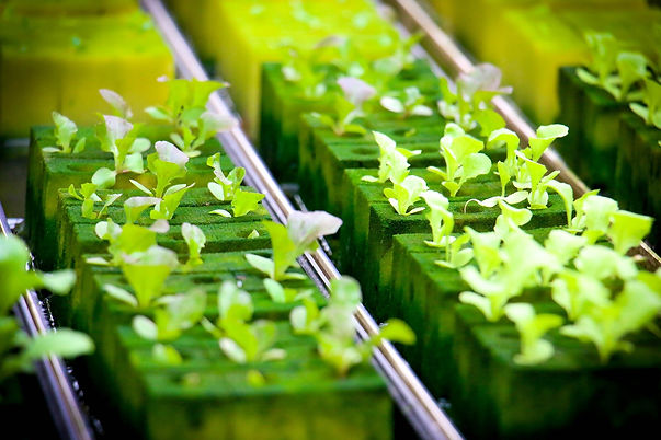 hydroponics-4447705_1920.jpg