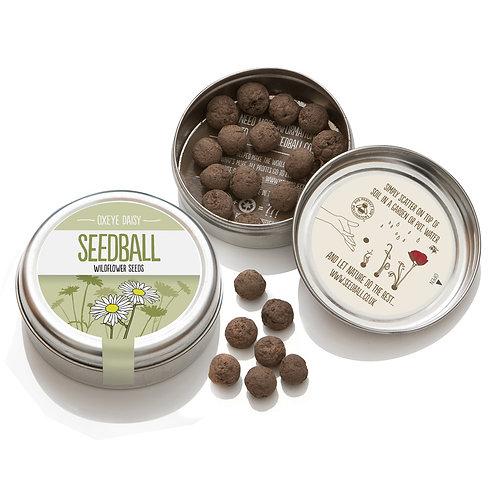 Seedball Oxeye Daisy Wildflower seeds