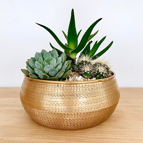 Handcrafted Brass Succulent Bowl Kit