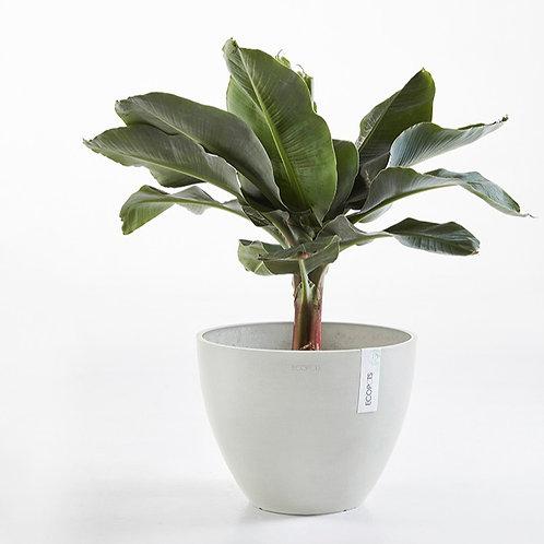 Ecopots - Antwerp Plant Pot