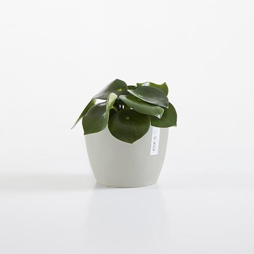 Ecopots - Stockholm Plant Pot