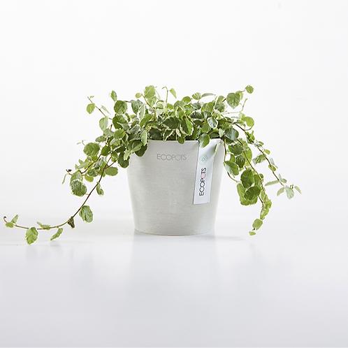Ecopots - Amsterdam Plant Pot
