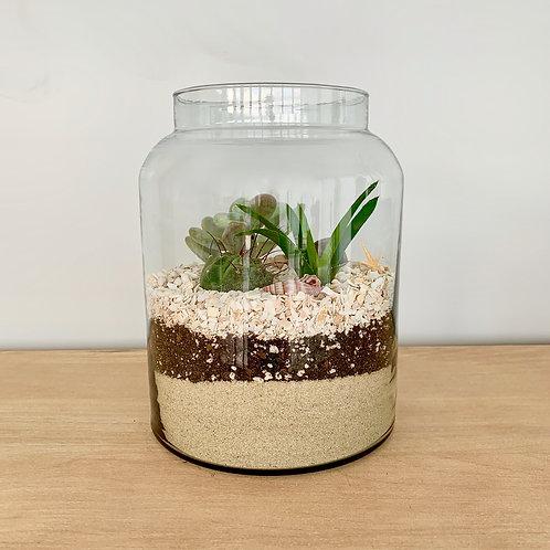 Succulent Seascape Terrarium Kit