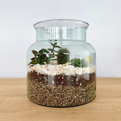 Seascape Terrarium Kit