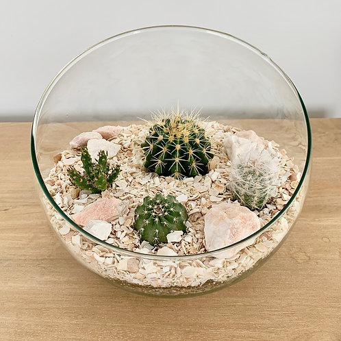 Cactus Garden Terrarium Kit