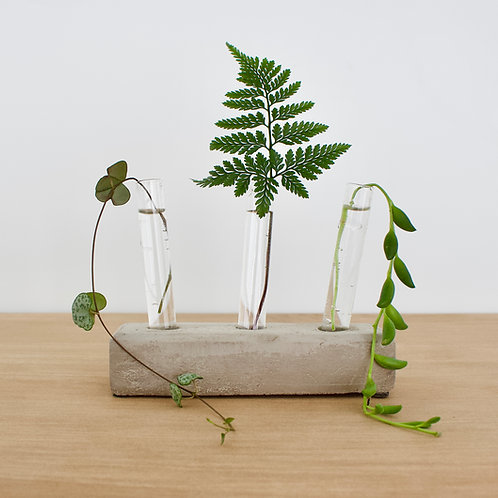 Test Tube Cuttings Set with Concrete Base