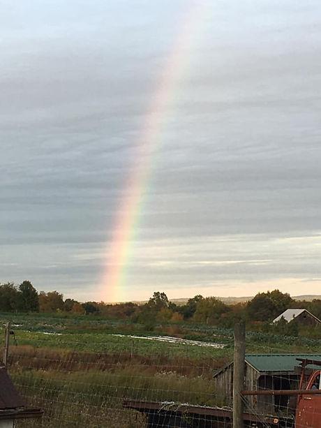 rainbowmf.jpg