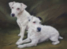 Bonnie and Clyde Jack Russels in Pastel