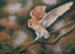 Barn Owl   Silent Hunter in pastel also print