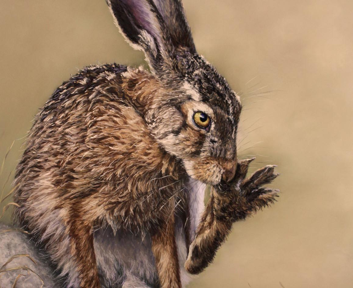 Grooming Hare