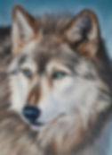 Timber Wolf in Pastel