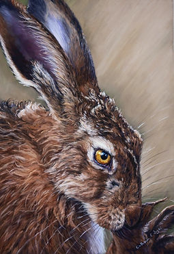 Brown Hare Head Study  .  This Original is for Sale