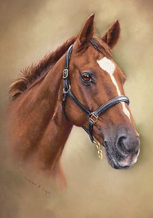 Caffery horse portrait