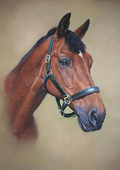 Dan Horse Portrait in Pastel