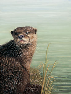 Otter in pastel