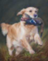 Golden Retriever Bibi in Pastel