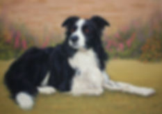 Collie  Glen  pastel painting catherine Inglis