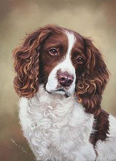 Jack  Springer Spaniel pastel painting