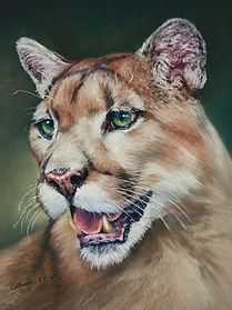 Mountain Lion in Pastel