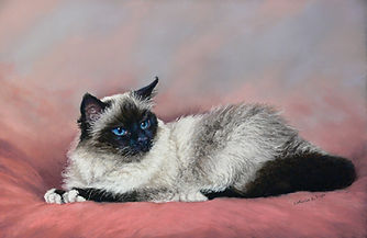Cat portrait in Pstel Catherine Inglis