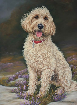 Scoobie the Spoodle in Pastel