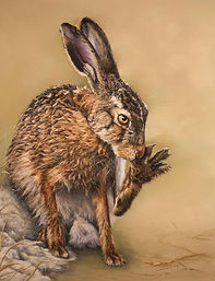 Grooming brown hare pastel painting and print