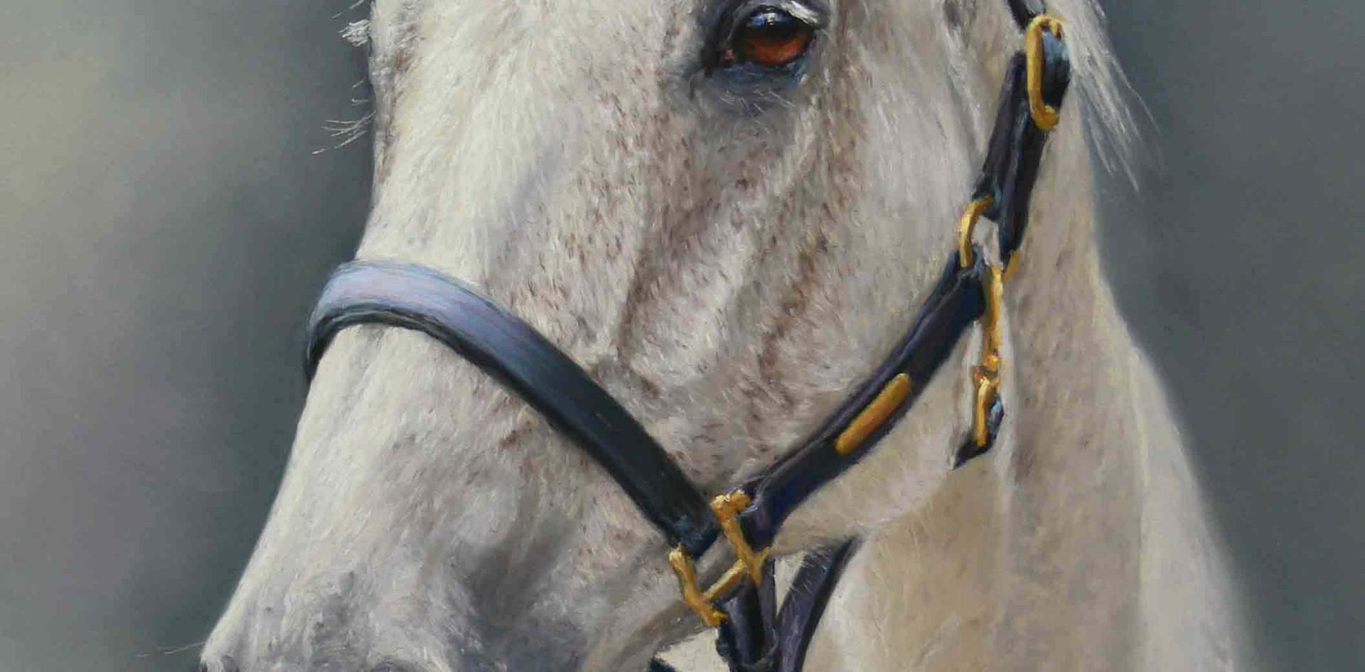 Magellan Grey Horse.