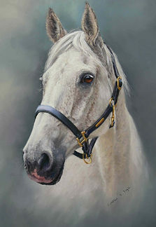 Magellan Grey Horse portrait in Pastel