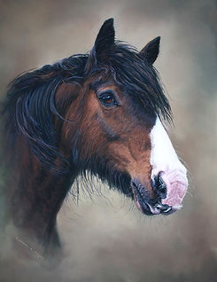 Billy welch cob horse portrait