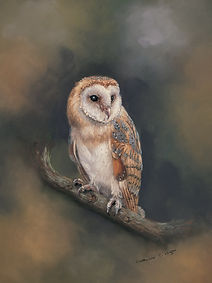 Barn Owl in Pastel painting and print