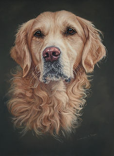 Oscar Golden Retriever in Pastel