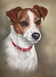 Rouse Jack Russel in pastel