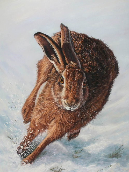 Running Hare in the Snow