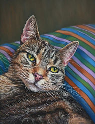 Maisie Tabby Cat in Pastel