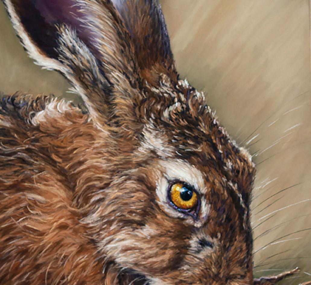 Grooming Hare Head Study