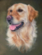 Golden Retriever Dixie in Pastel