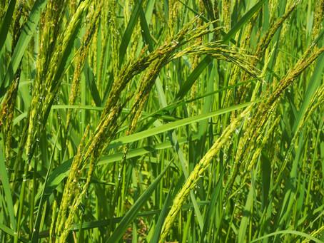 มาตรฐานเกษตรอินทรีย์ l Organic Standard