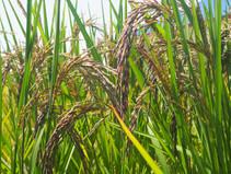 เกษตรอินทรีย์คืออะไร l What is Organic Farming