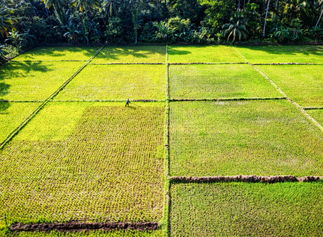 Organic Learning Center : เรียนรู้เกษตรอินทรีย์ โดย ดร.รณวริทธิ์ (ตอนที่ 1)