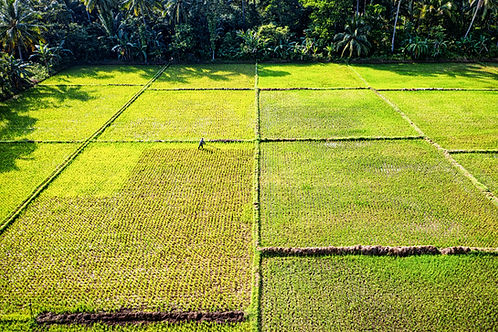 aerial-photography-of-green-rice-field-2