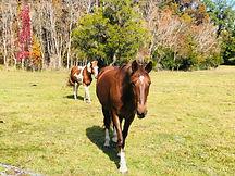 CLH---Horse.jpg