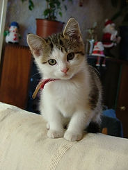 Cleo as a Kitten.