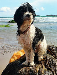 Willow posing on the beach whilst on holiday with The Cambridge Dog Lodge.