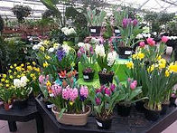 Fresno Landscaping Pick Your Plants