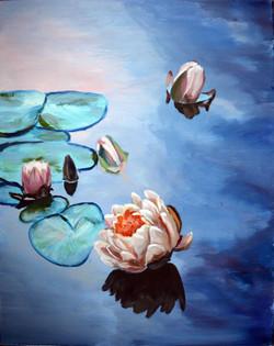 Белые и розовые кувшинки