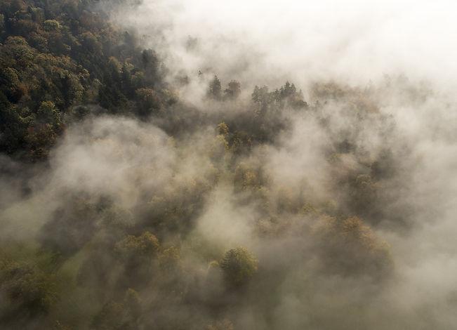 fog-2879455_1920_edited.jpg