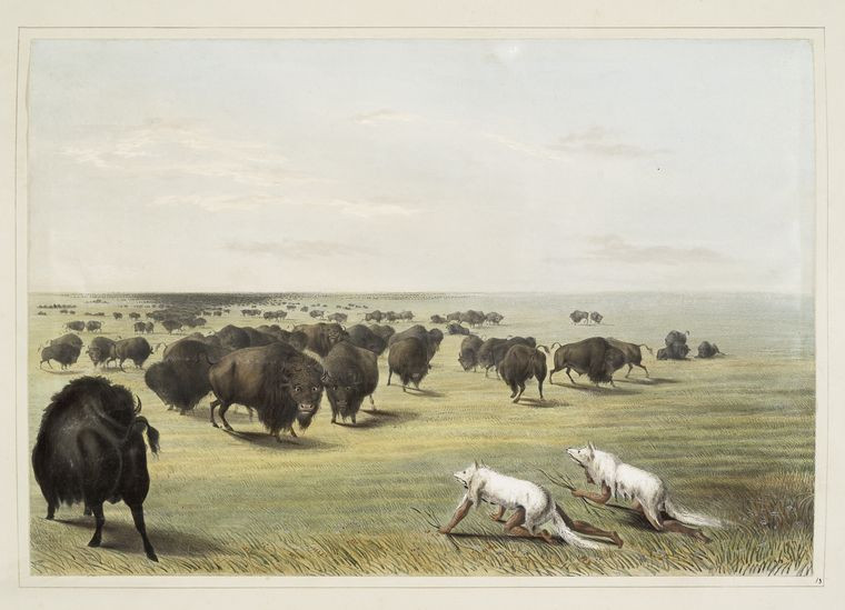 "George Caitlin's ""Buffalo hunt. Under the white wolf skin"" (1845) ; From the New York Public Library"