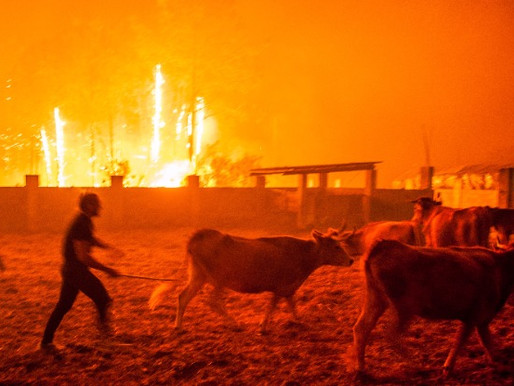 Portugal's €615 Million Plan for Forest Fire Management