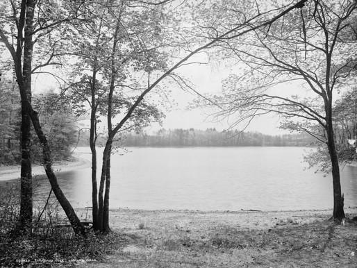 Walden Lost: COVID-19