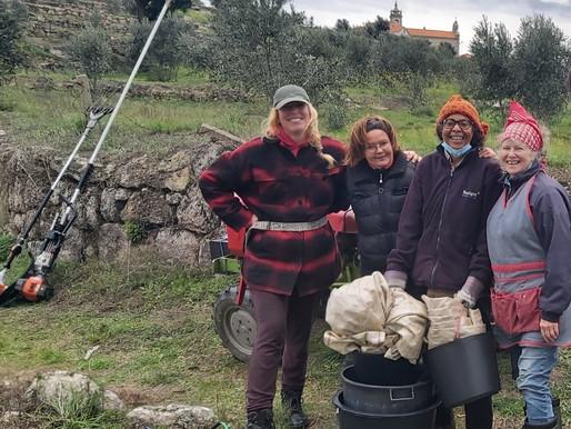 Counting Votes, Picking Olives: Honest Work